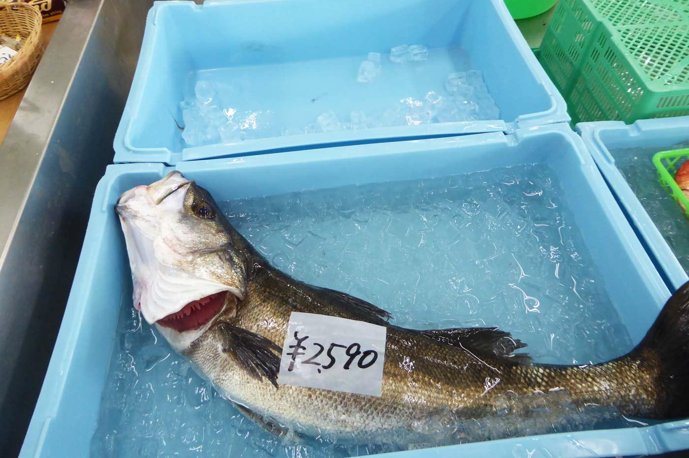 鮮魚コーナーのスズキ