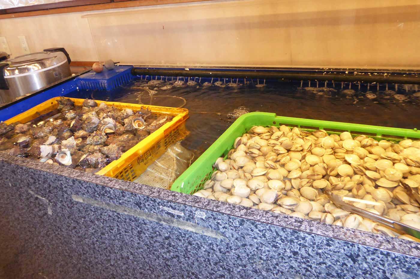 サザエとホンビノス貝の画像