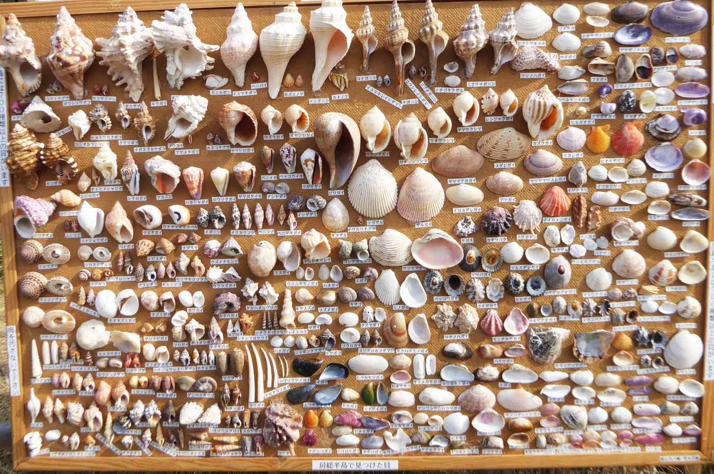 貝殻の標本