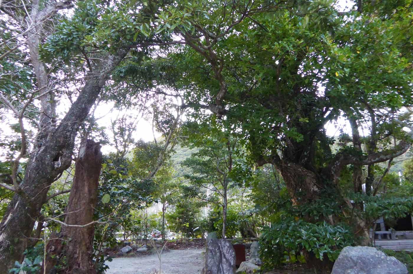 千葉県天然記念物の木の画像