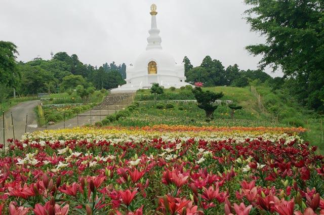 仏舎利塔周辺のユリ畑の画像