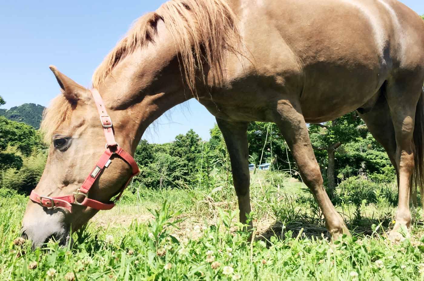 馬森牧場の馬のアップ