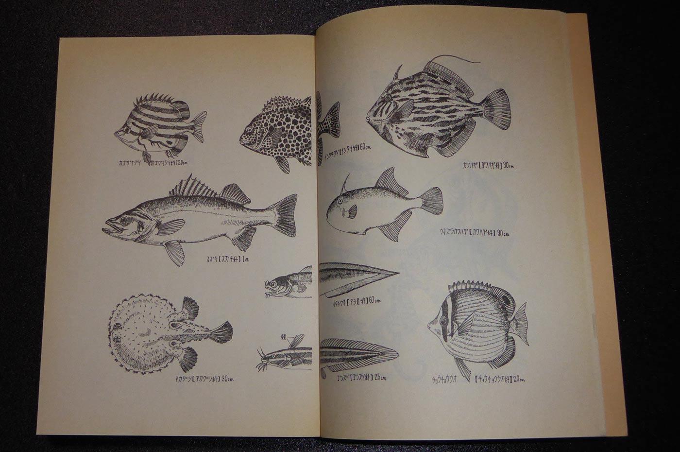 西岬の魚たち