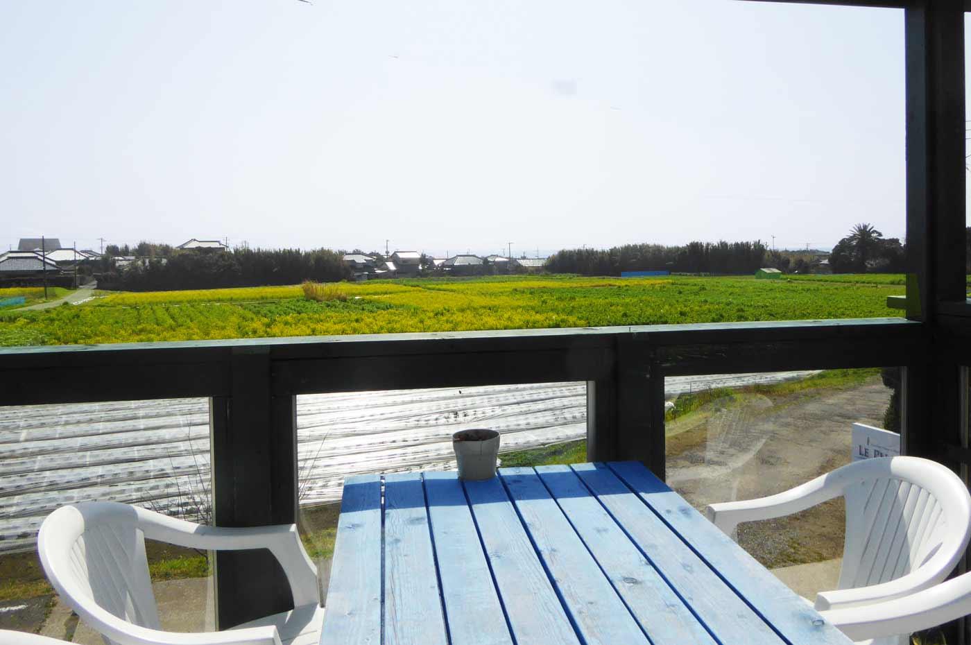 店舗前の菜花畑の画像