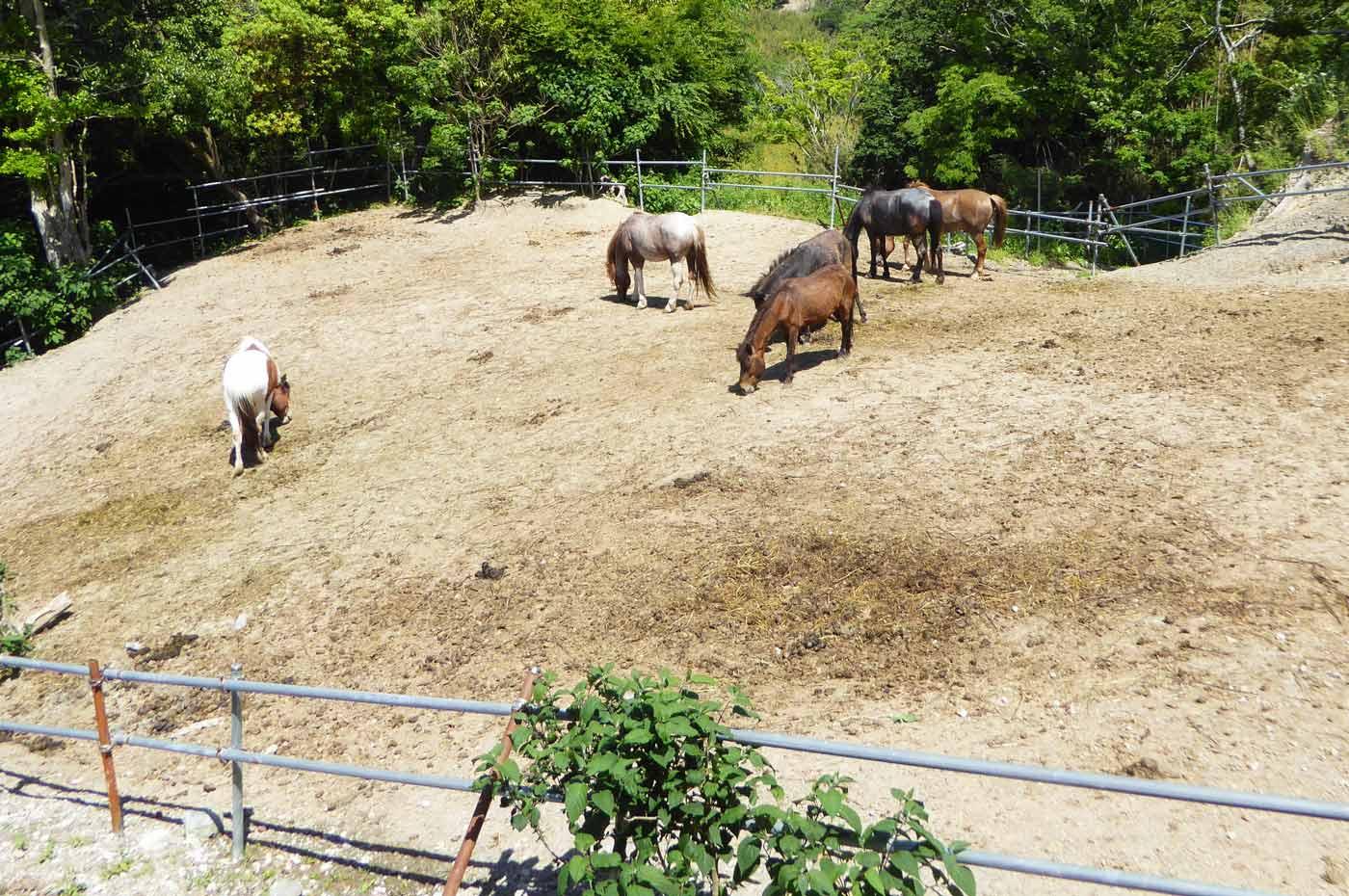 馬森牧場のポニー