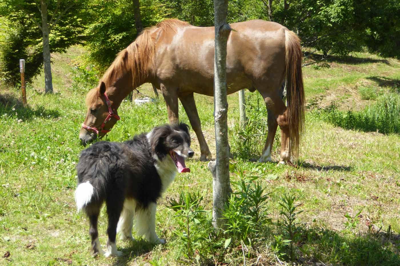 馬森牧場の馬達