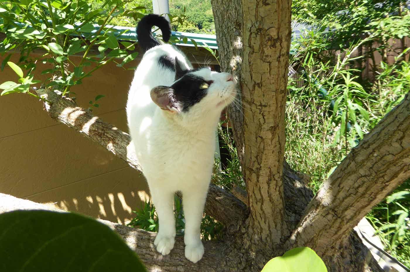 木登りして得意気な猫