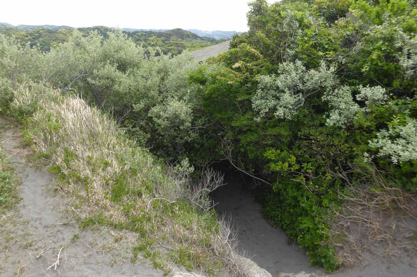 砂山の林の道