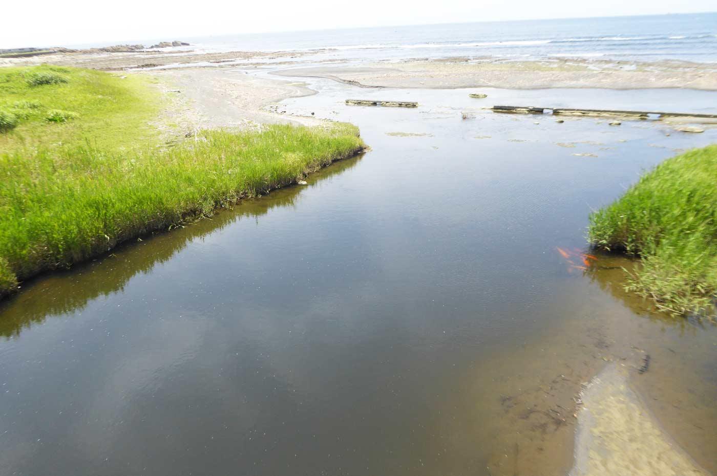 長尾川河口の画像
