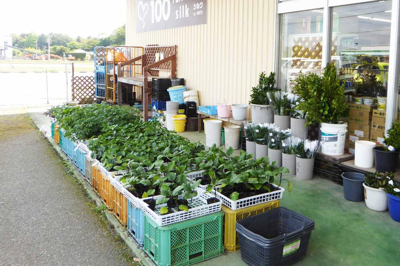 野菜・花の苗販売コーナーの画像