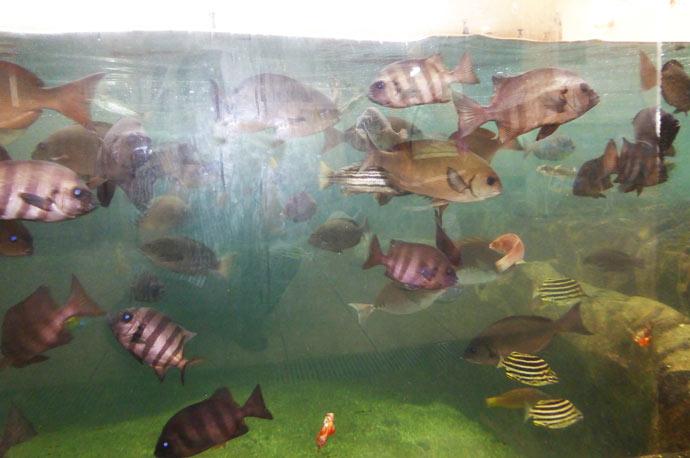 ミニ水族館の大水槽の画像