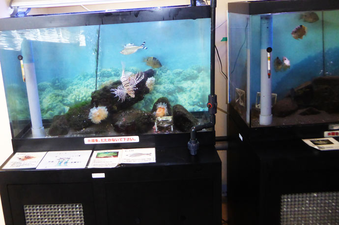 ミニ水族館の小水槽の画像