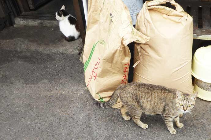 相浜亭の猫達その1