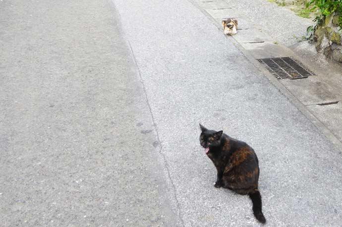 相浜亭の猫達その2