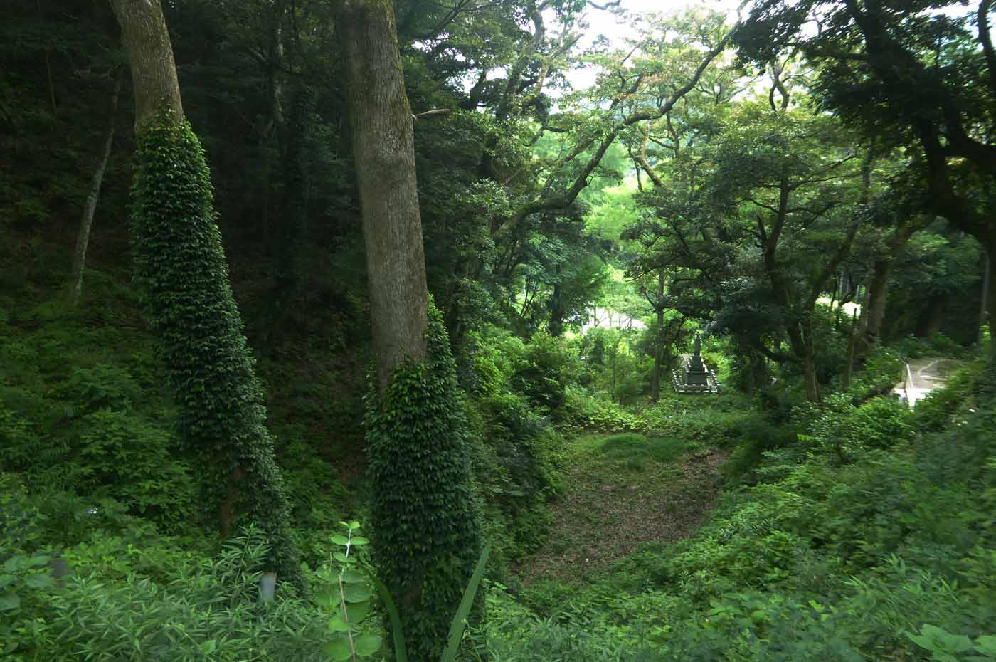 境内前の森