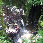 不動滝の滝壺