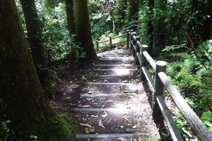 東屋への階段を上から撮影