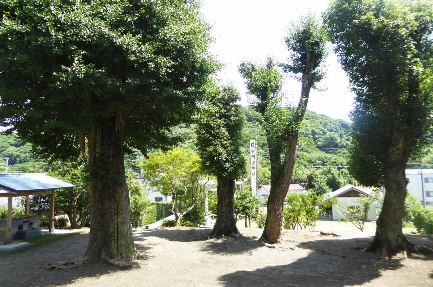 洲宮神社境内の大木の画像