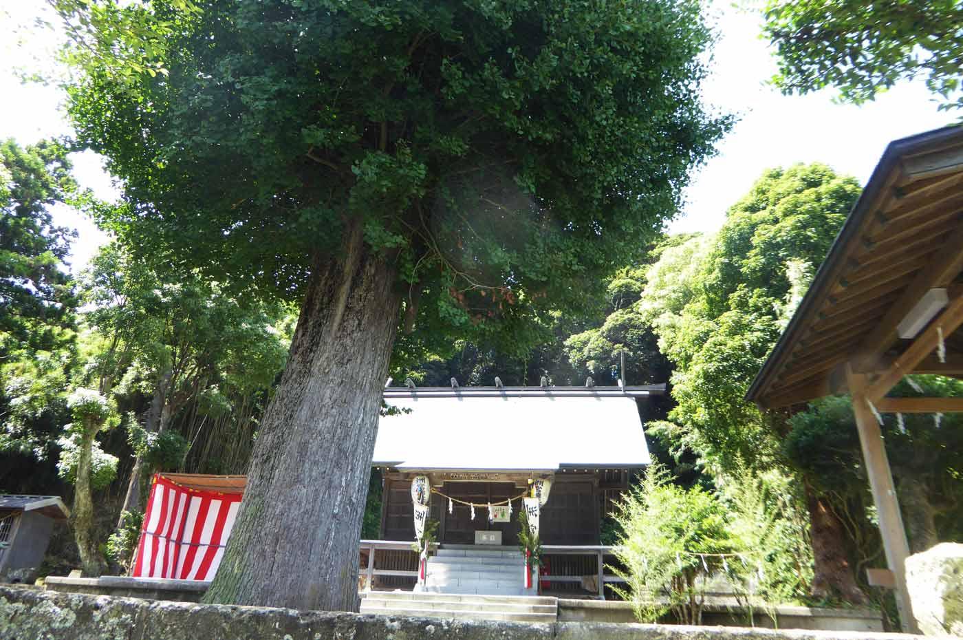 洲宮神社ご神木の大銀杏と拝殿