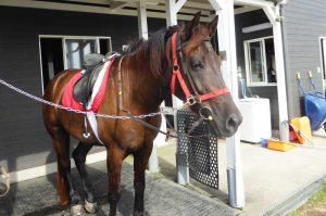 ホーストレッキングパーク館山の馬