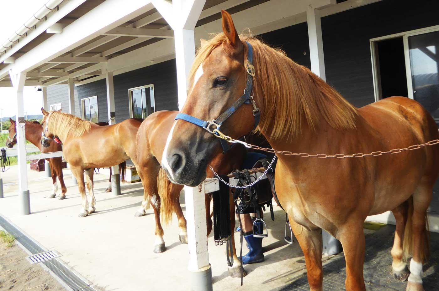 ホーストレッキングパーク館山の馬のアップ