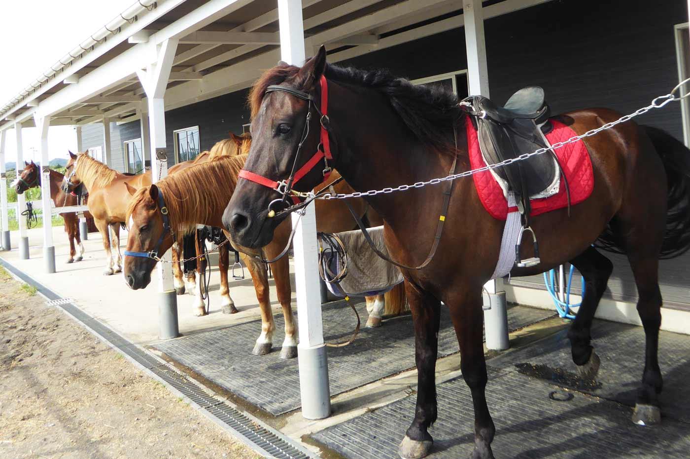 ホーストレッキングパーク館山 顔の黒い馬