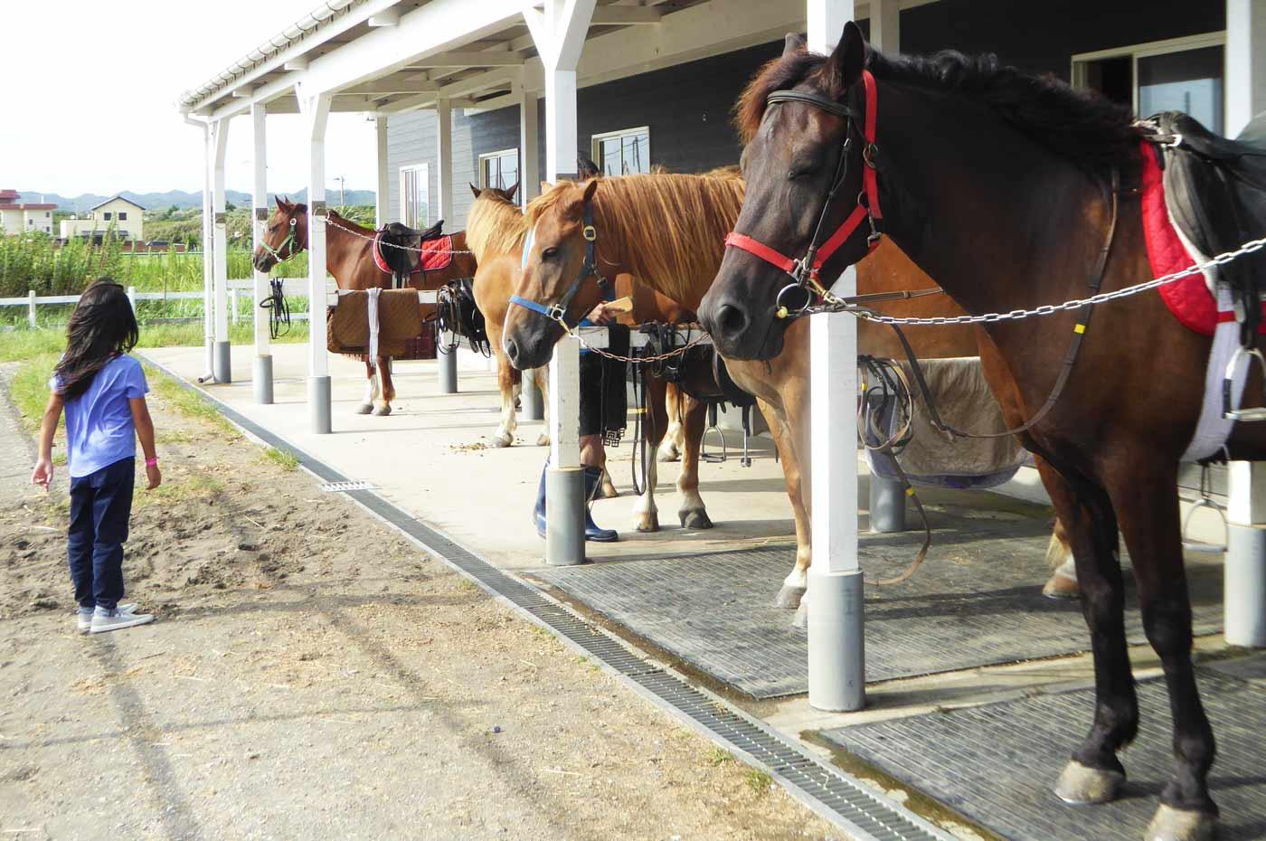 馬と女の子の画像2