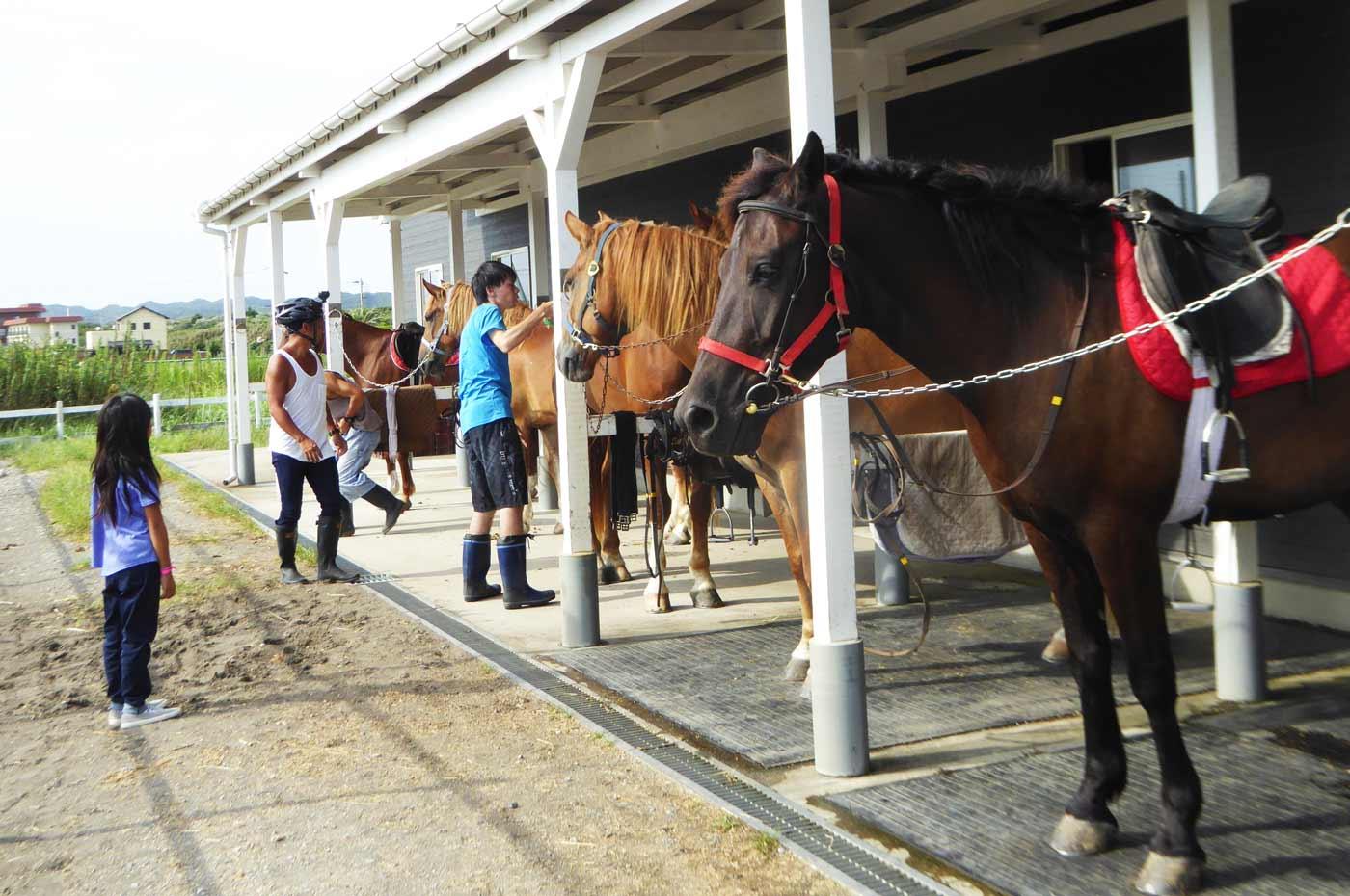 馬の世話をする管理人