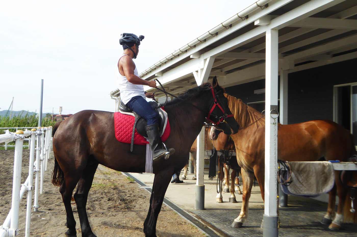 馬に乗る管理人
