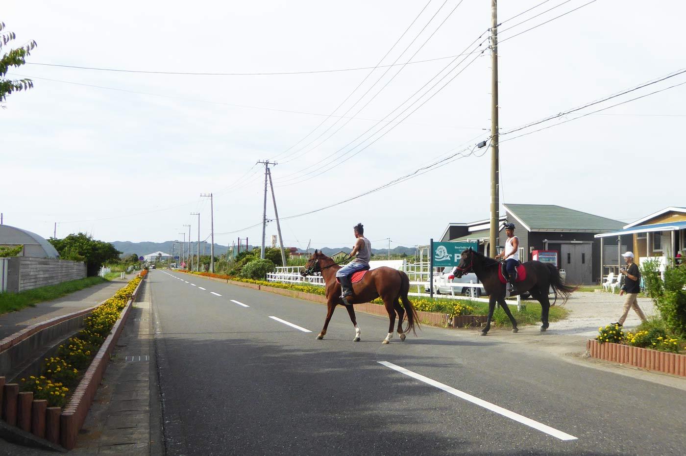 房総フラワーラインを馬で散歩