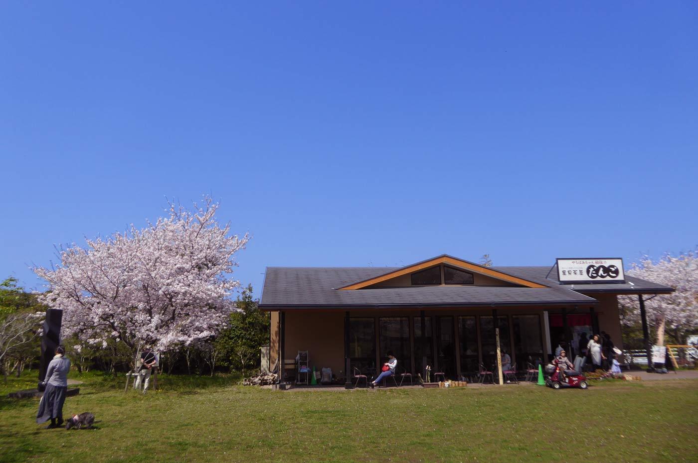 里見茶屋と桜