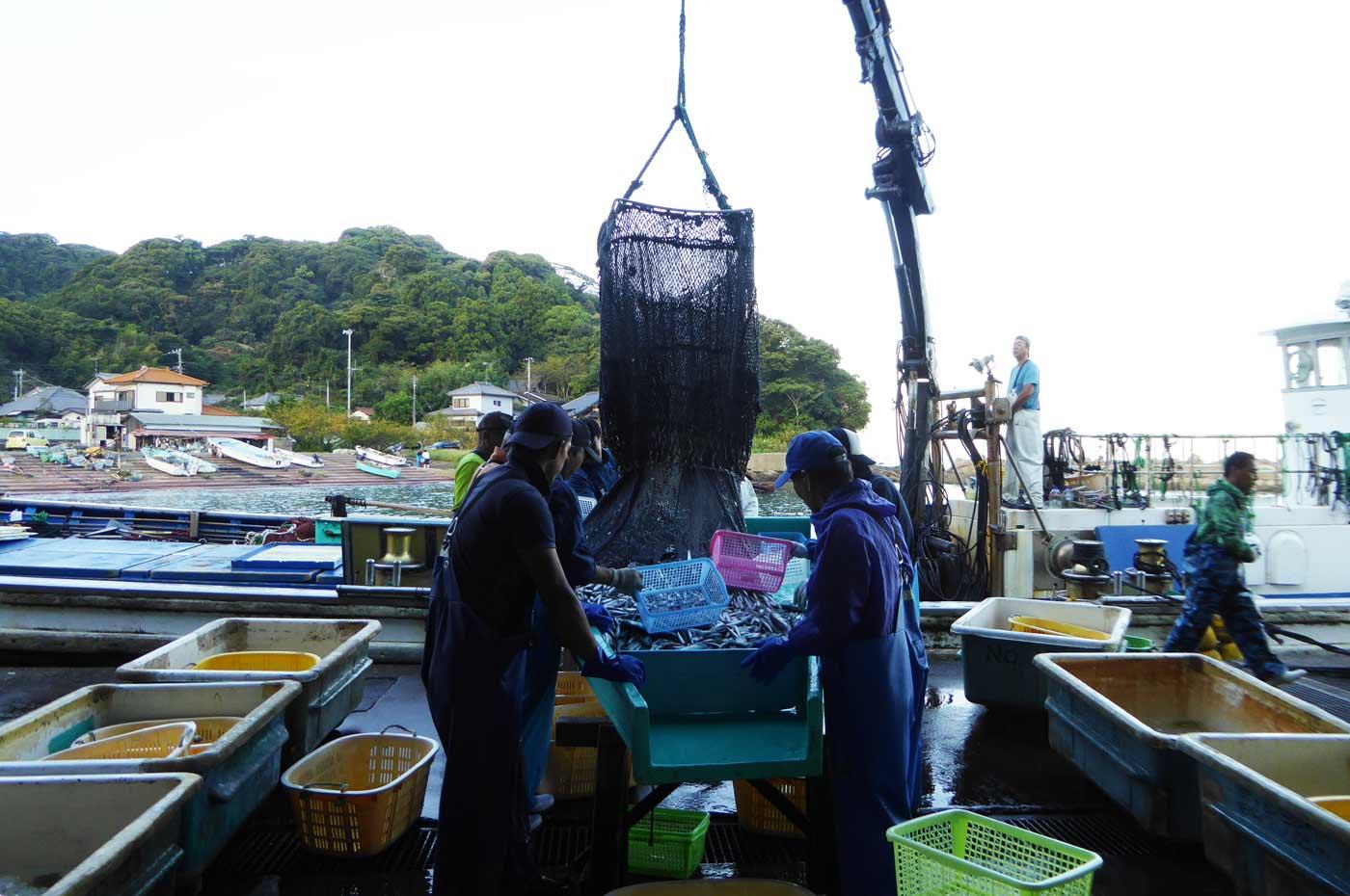 魚を船から港へ運ぶ様子