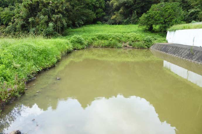 慈雲寺前の左の溜池