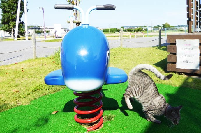 鯨の遊具から降りる猫