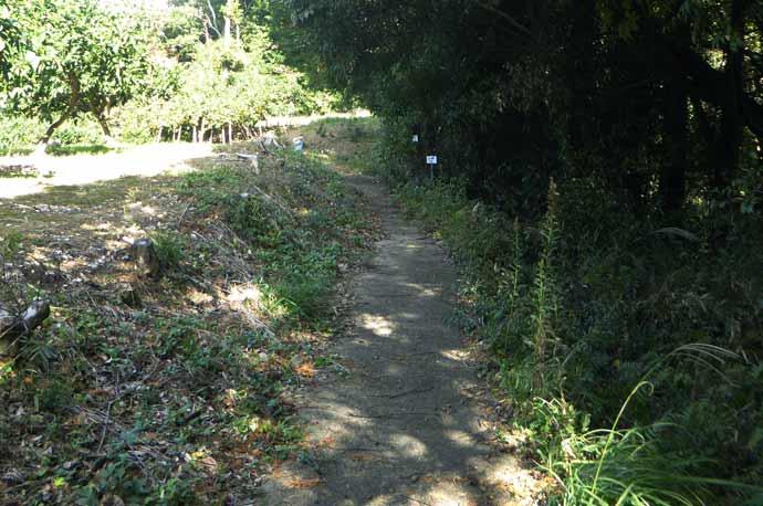 平松城址への道のり(畑の横の道)