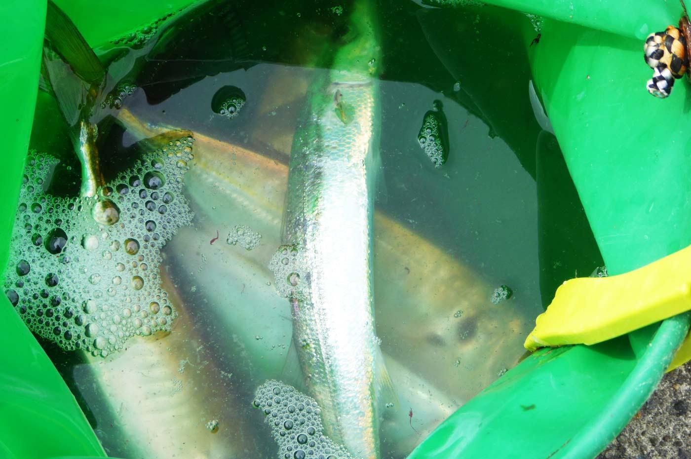 小湊の釣果の画像