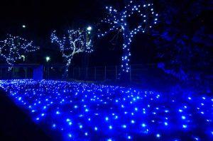 伏姫公園のクリスマスイルミネーションの画像