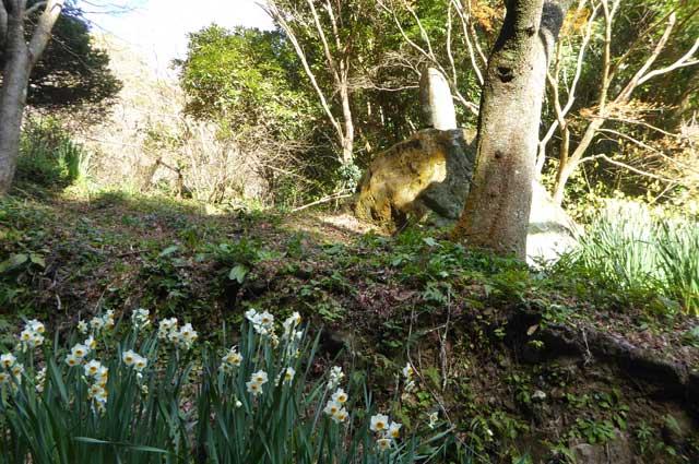 犬塚信乃の石碑と水仙の花