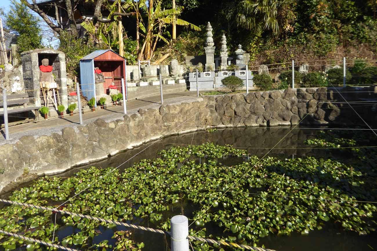 寿薬寺境内の池の画像