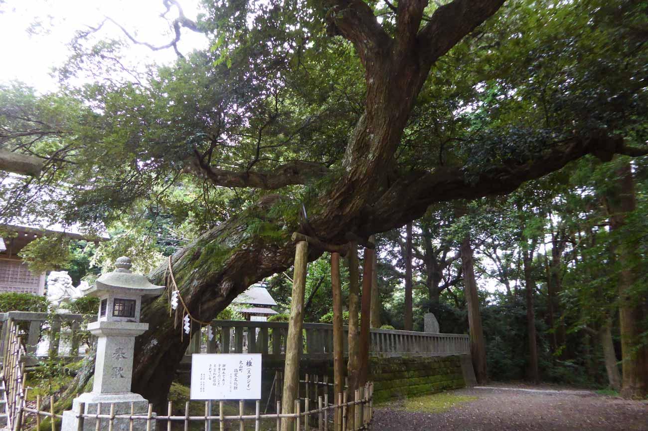 莫越山神社御神木の画像