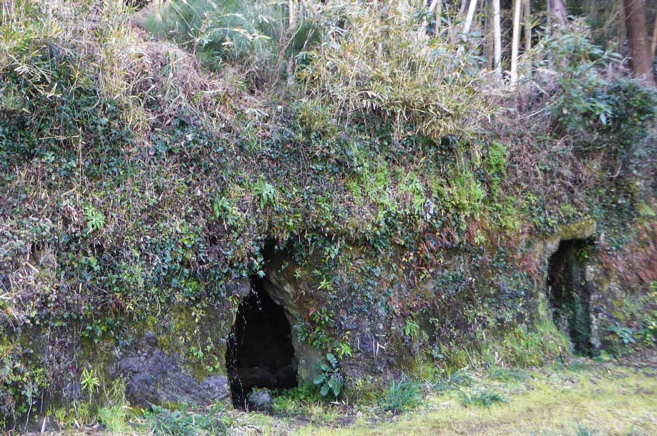 沼のヒカリモの横穴の画像