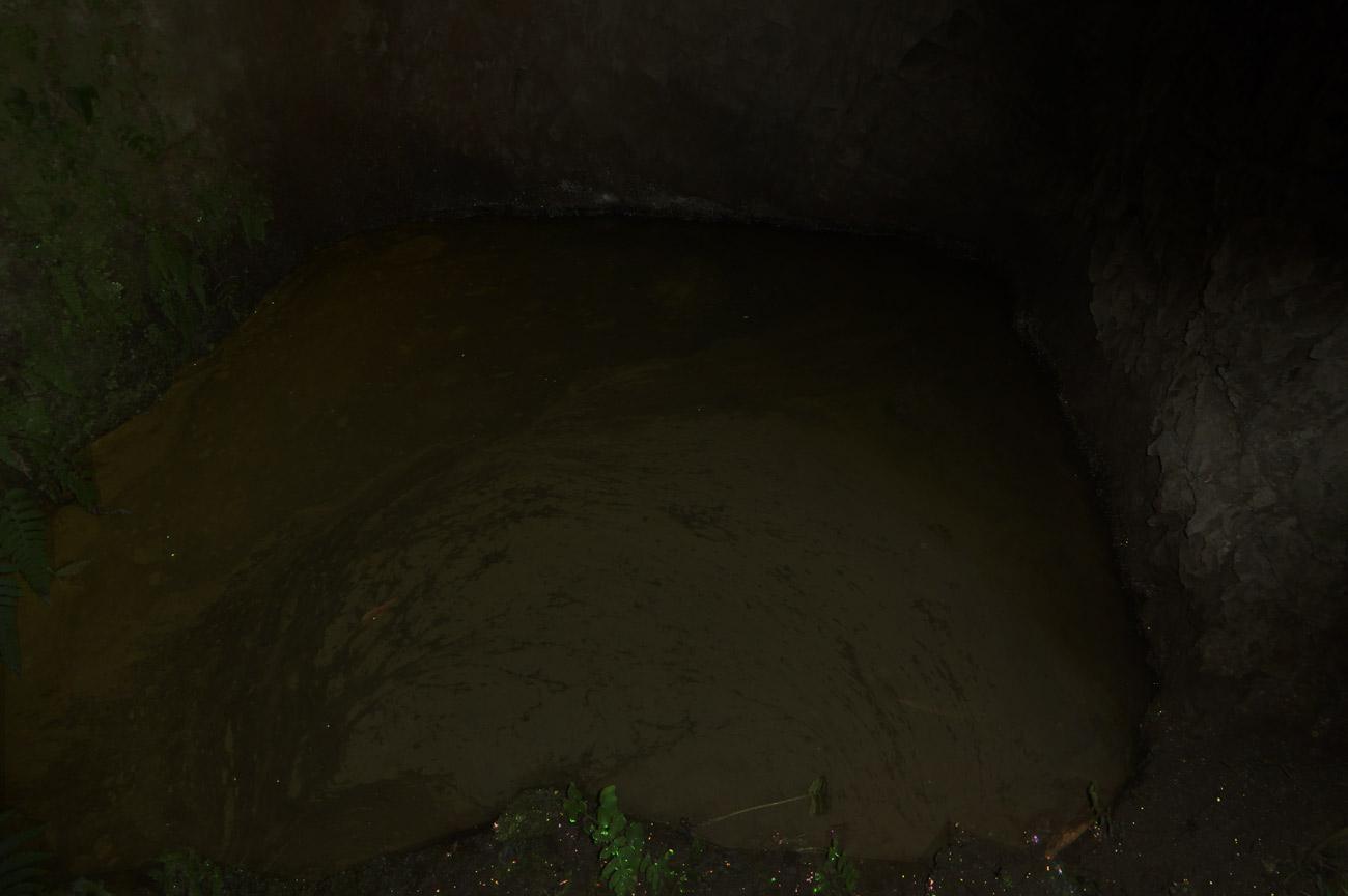 沼のヒカリモの画像