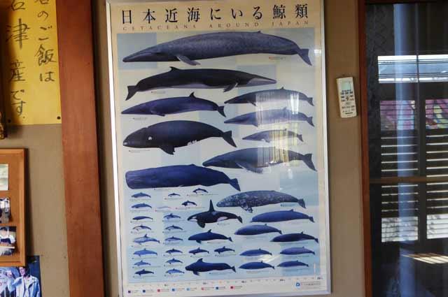 クジラの種類の画像