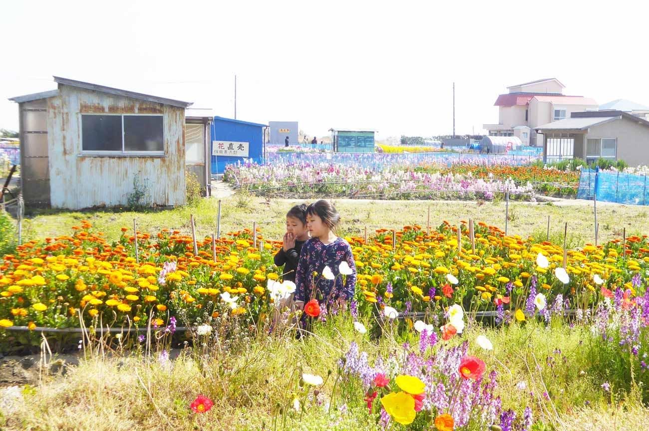 白間津の花畑の画像