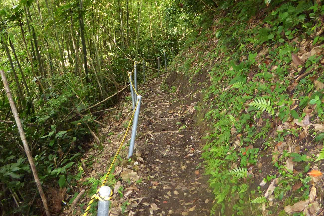 安房グリーンライン菅田の滝への山道の画像