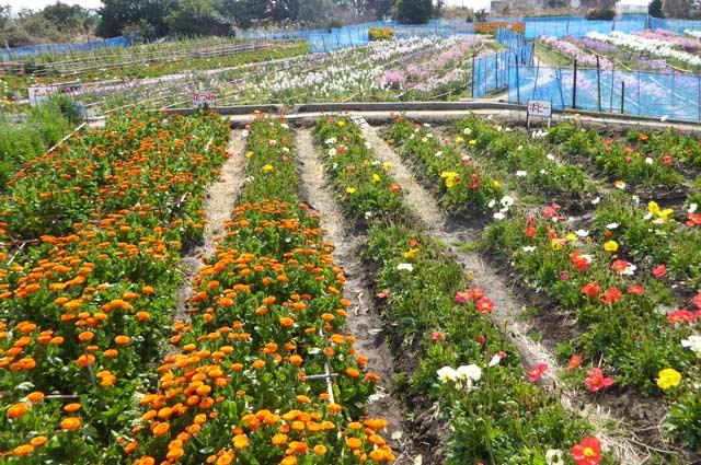 花の里フローラルビレッジ名倉の画像