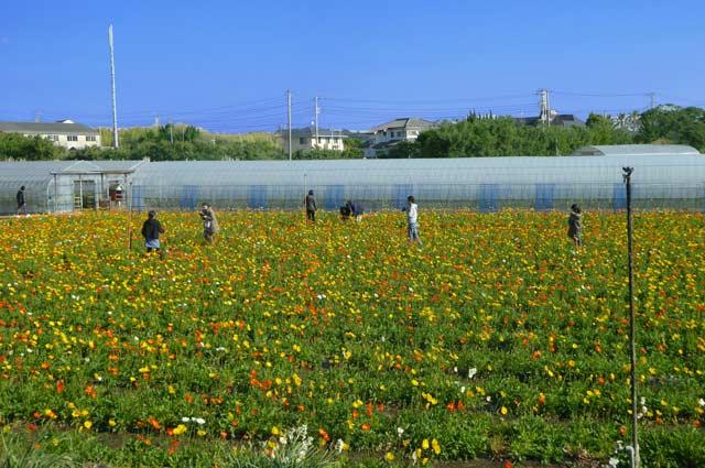 館山ファミリーパークの画像
