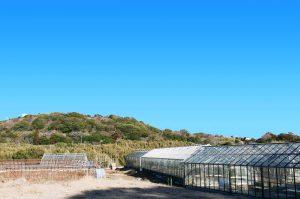 安田農園のメロンハウスの画像
