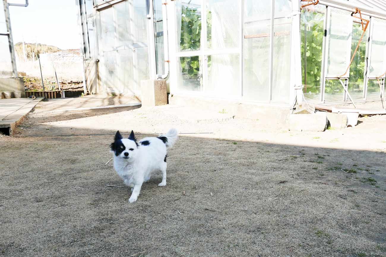 ハウス周辺で遊ぶ子犬の画像