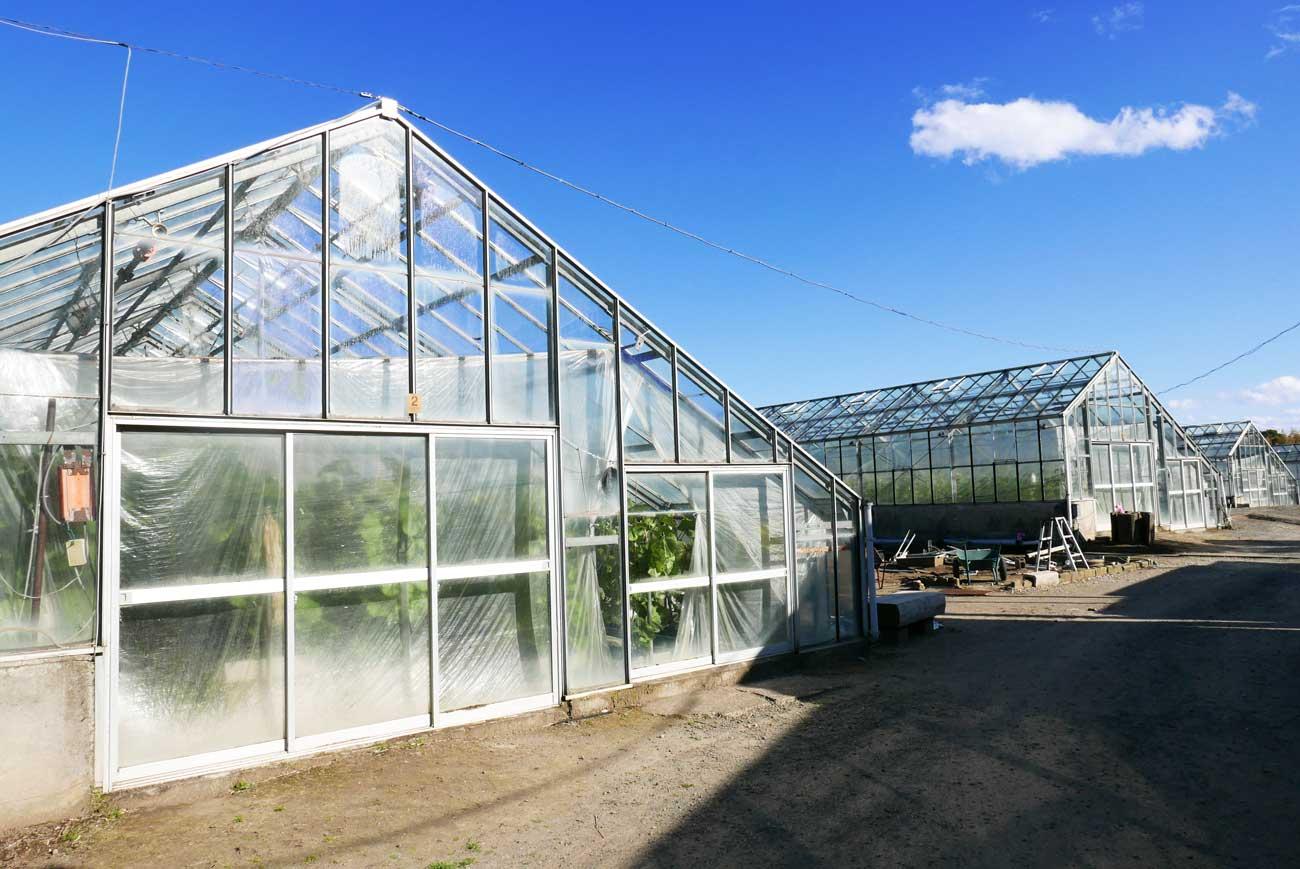 安田メロン農園のガラス温室の画像